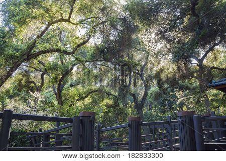 Beautiful Descanso Garden