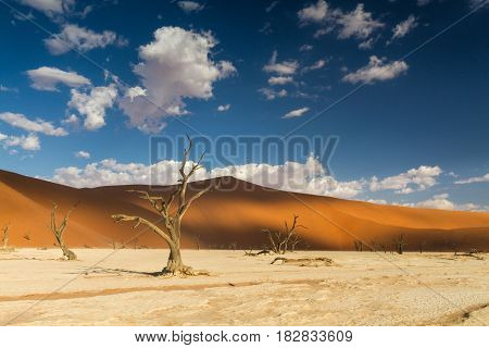 Dead trees at the Dead Vlei Sossusvlei Namibia Africa