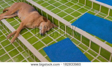 image of stray dog sleep in outside the house.
