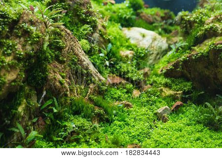 Aquarium Tank With Aquatic Plants .