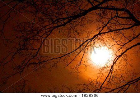 Eerie Moonlight In Orange