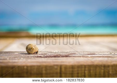 Colorful hermit crab climbing on wooden board in front of ocean