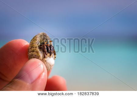 Colorful hermit crab in fingers of a child