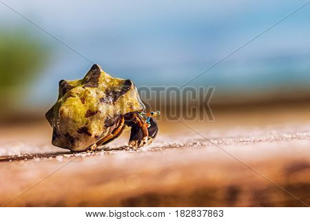 Colorful hermit crab climbing on wooden board