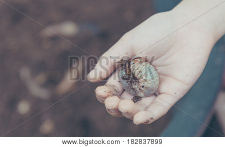 Hand Holding A Orange Beetle Larvae.