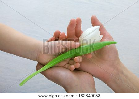 Baby hand with white flower in mother's palm