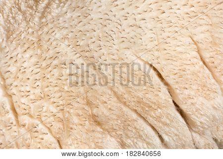 Close up image of a sheep fleece