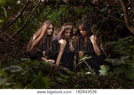 Witches In The Dark Summer Forest