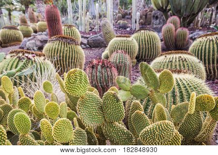 Cactus Park - Gran Canaria. Gran Canaria Canary Islands Spain