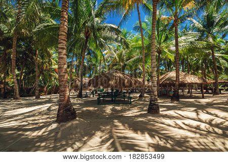 Palm Trees On The Tropical Beach. Saona Island.