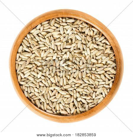 Rye grains in wooden bowl. Secale cereale, grain, cover and forage crop.  photo close up from above, white background.