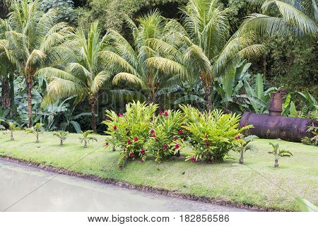 Tropical garden with trees plans palm fern flowers
