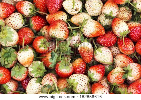 Red sweet strawberries are used for the background.