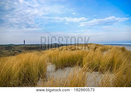 Sand dunes with dune grass at Northern Sea of Europe in Netherlands
