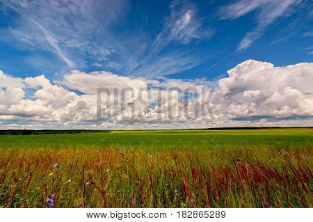 Background with green field under clouds and blue sky, growing roadside grass