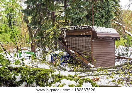 CHISINAU, MOLDOVA - APRIL 21, 2017: Destroyed coffee shop, heavy snow on frozen city, spring anomaly, natural cataclysm, falling green trees disaster, general emergency state, exceptional situation