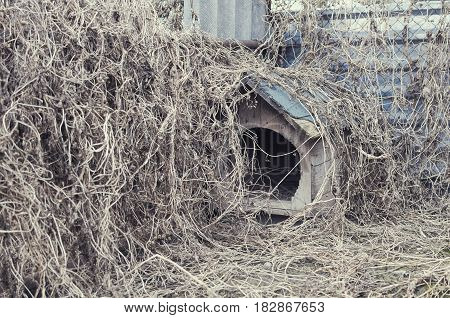 Empty Abandoned Overgrown Doghouse with Dry Weeds
