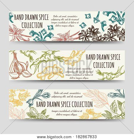 Spice and herbs banners template. Vector vintage banners with hand drawn spice