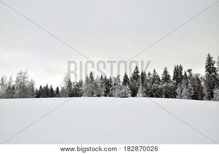 Snowy glade at the edge of the forest.