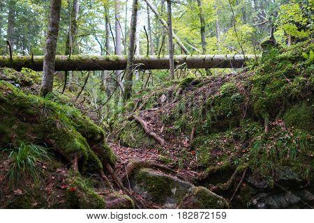 Green subtropical forest in switzerland in autumn