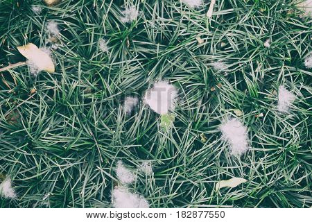 White Cotton And Leaves On Grass