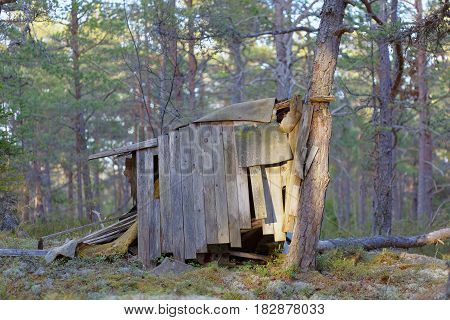 Aged childrens hut made of plank in the pine tree forest in evening light
