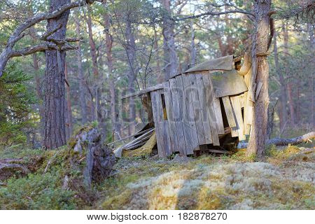 Aged children hut made of plank in the pine tree forest in evening light