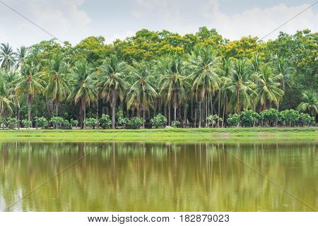 coconut palm tree and lake at thailand