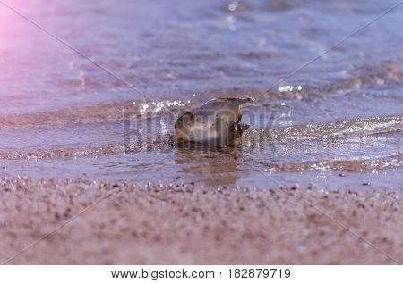 Beautiful Marine Shell In Sea Water Rippling On Sand Beach