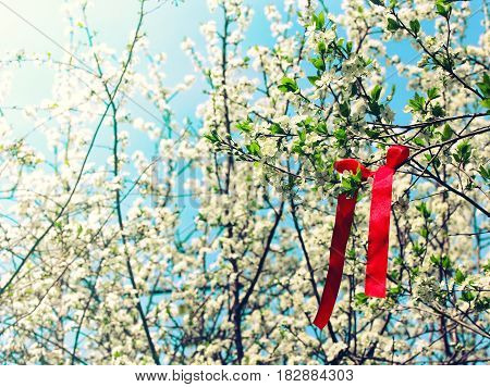 Spring background blossom branch plum red silk ribbon holiday May Day selective focus