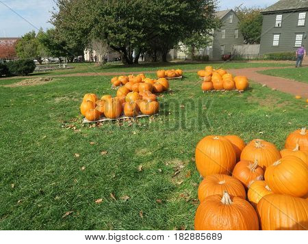 Pumpkin field for sale in New Port United States