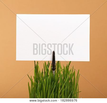 Spring Green Grass And White Paper Sign Over Brown
