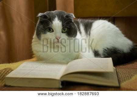 Cat read a book in the bed