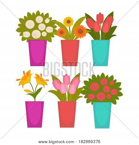 Vector illustration of the assortment of the blooming plants in vases.