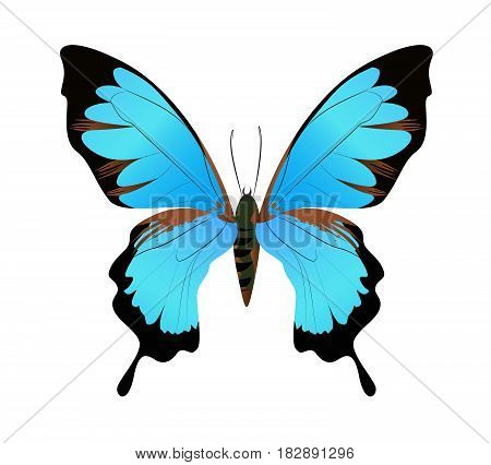 Isolated beautiful butterfly on white background. Blue and black colors.