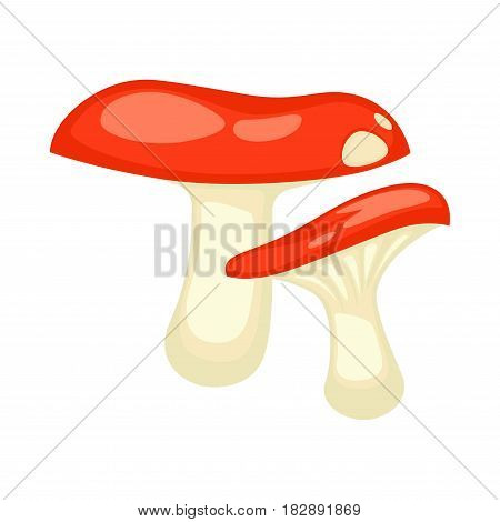 Two russulas mushrooms with red glossy caps and white leg flat icon on white background. Types of mushroom poisonous and edible. Vector illustration of genus of lamellar fungi in cartoon style