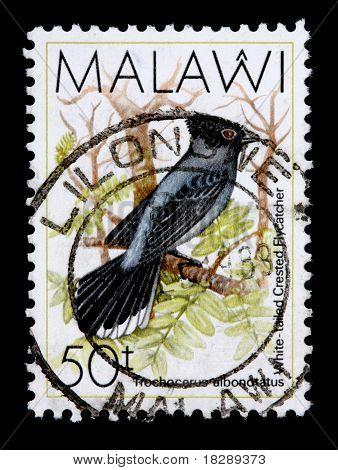 Malawi - Circa 1988: A 50-tambala Stamp Printed In Malawi Shows The Bar Tailed Trogon, Trochocerus A