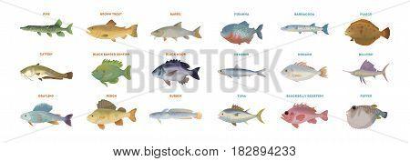 River fish set. Isolated fish on white background.