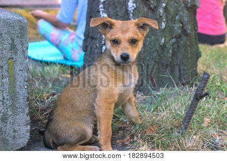 stray dog stray puppy near the people