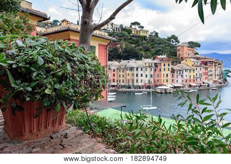 Green plants in pot at hill of Portofino town, Italy