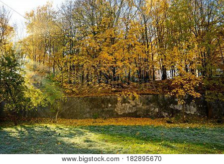 Autumn Scenery Of Yellow And Dry Leaves.
