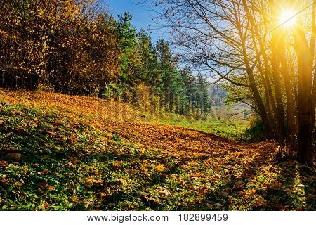 Autumn Landscape In The Mountains With Colorful Forest Haycock T