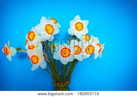 The white narcissus. Spring Flower. Bouquet of narcissus in a vase. Romantic gift. Mothers Day.