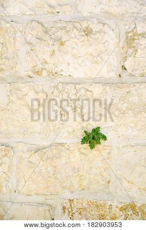 Dormition Abbey In Jerusalem