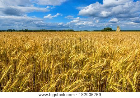 Field with ripening wheat and old windmill at horizon, Europe