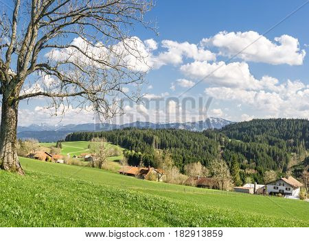 Solitary big bald tree standing on a hill in springtime. Blue sky with clouds and snow covered mountains in a rural countryside with farmhouses.