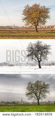 pear tree in different seasons. A close up