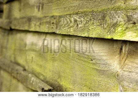 Green Moss On A Old Wooden Fence.