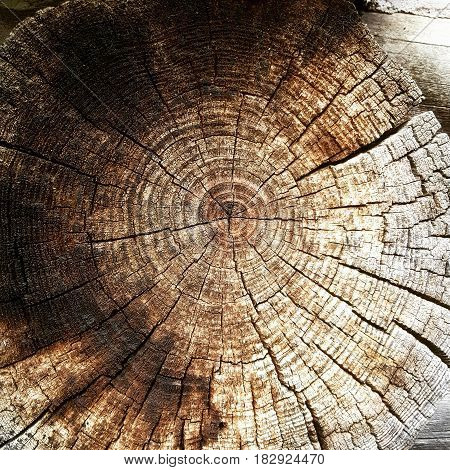 Wooden tree from log cabin background with grain detail