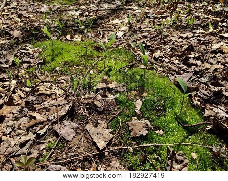 moss covered forest floor with pant life